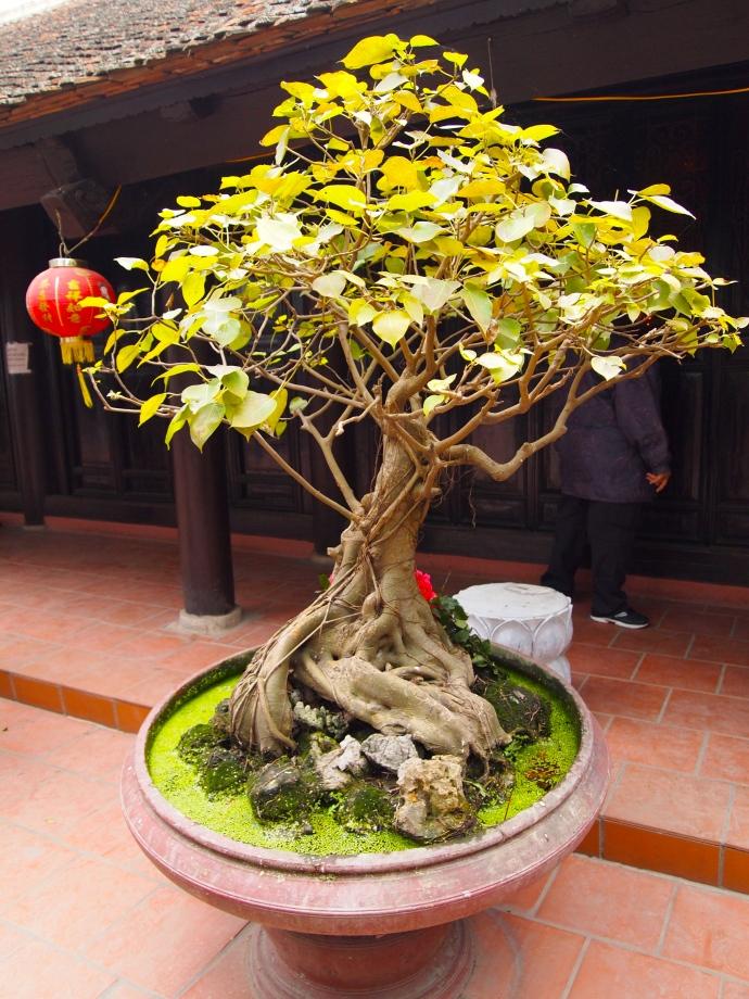 Bonasi at Tran Quoc Pagoda