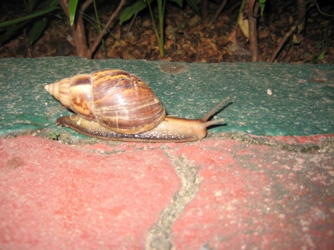 a little snail friend