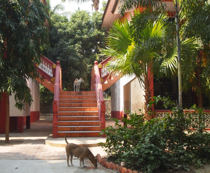 Sitagu International Buddhist Academy