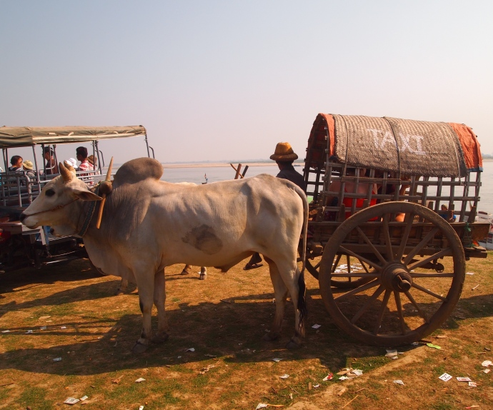 our oxcart