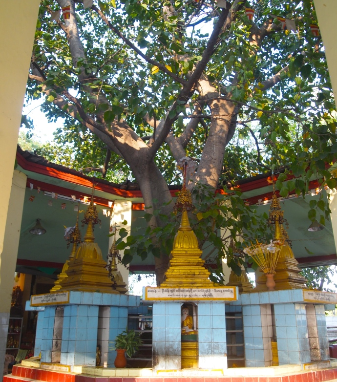 tree at Mahamuni Paya