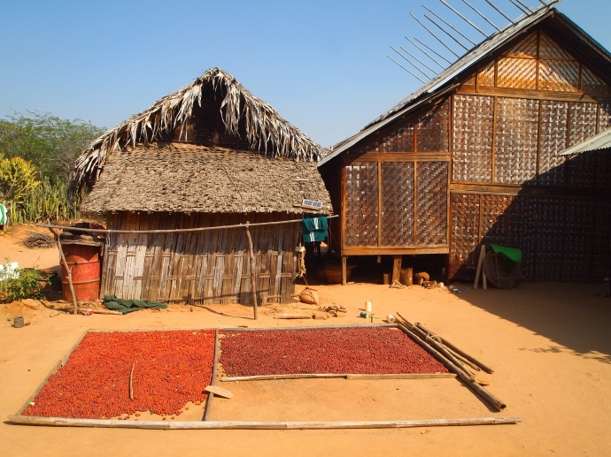 drying nuts at Minnathu Village