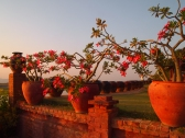 The Sunset Garden
