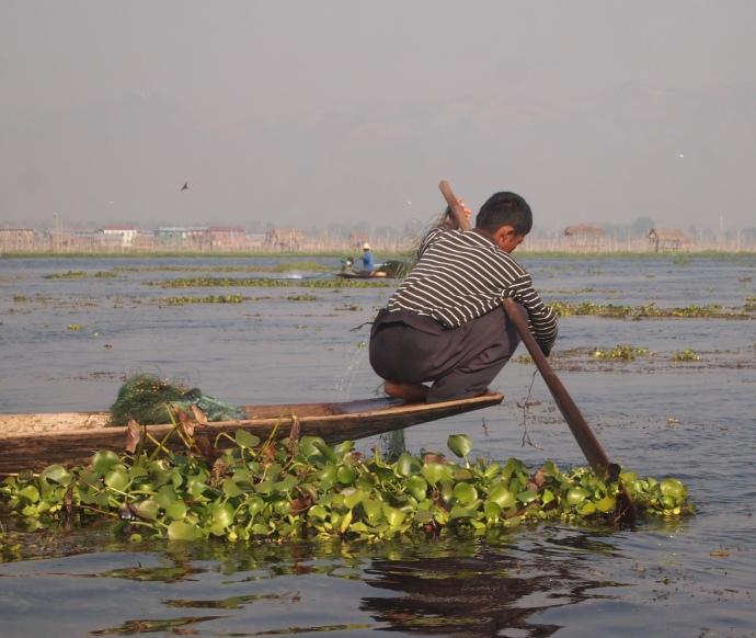 local Burmese
