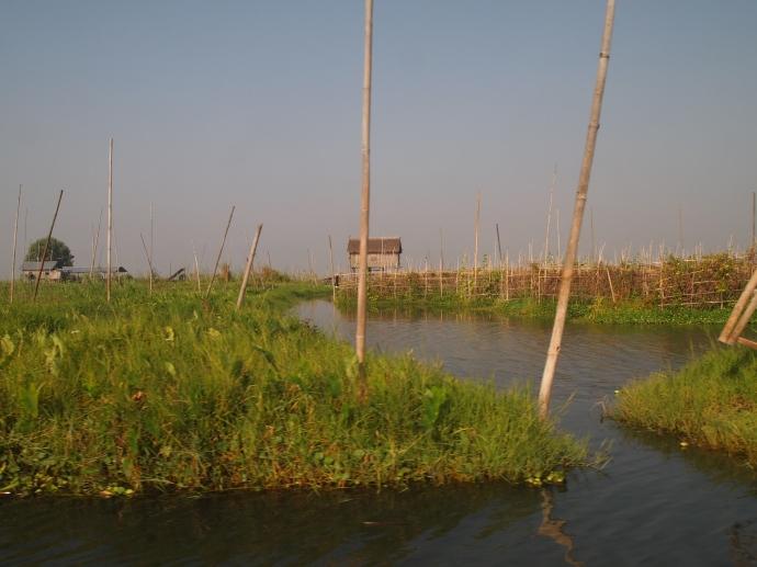 floating gardens of Inle Lake