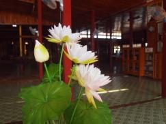 lotus flowers at Nga Phe Chaung Monastery
