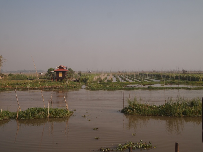 view of floating gardens from Nga Phe Chaung Monastery