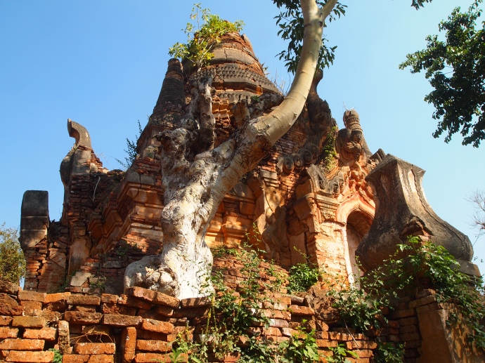 tree growing out of Nyaung Ohak
