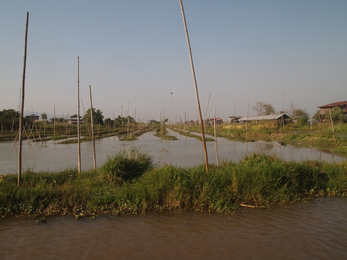 floating gardens of Inle Lake